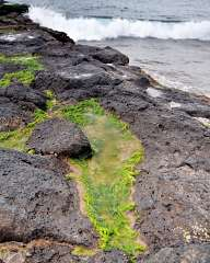 Algae on the rocks