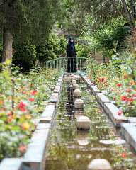 From the gardens of Tehran