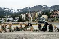Puppies in Ushuaia