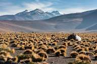 Landscapes from Atacama