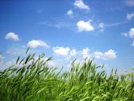 Green grass against a blue sky with clouds