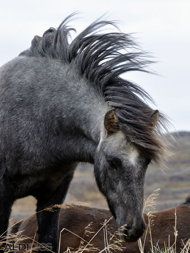 Horses somewhere in Iceland