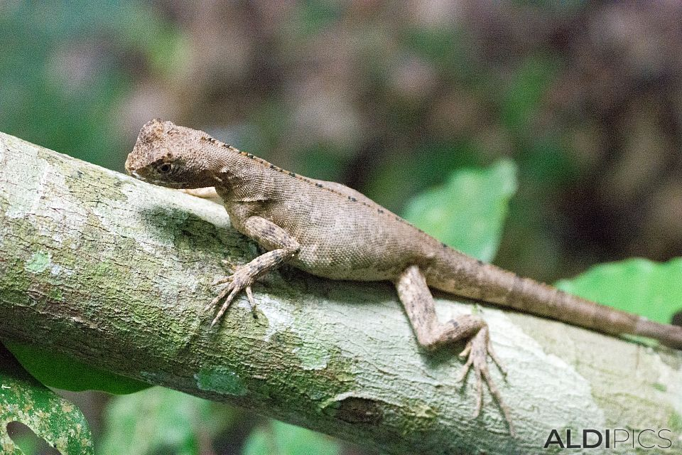 Lizard in jungle