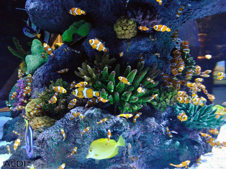 Aquarium Forum Istanbul