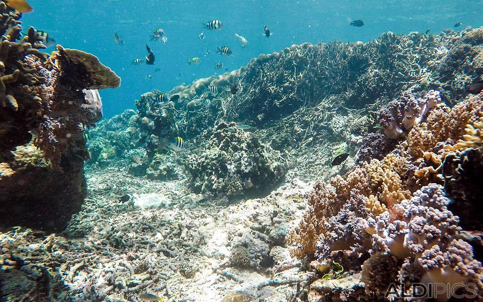 Рифовете на Джили Мено