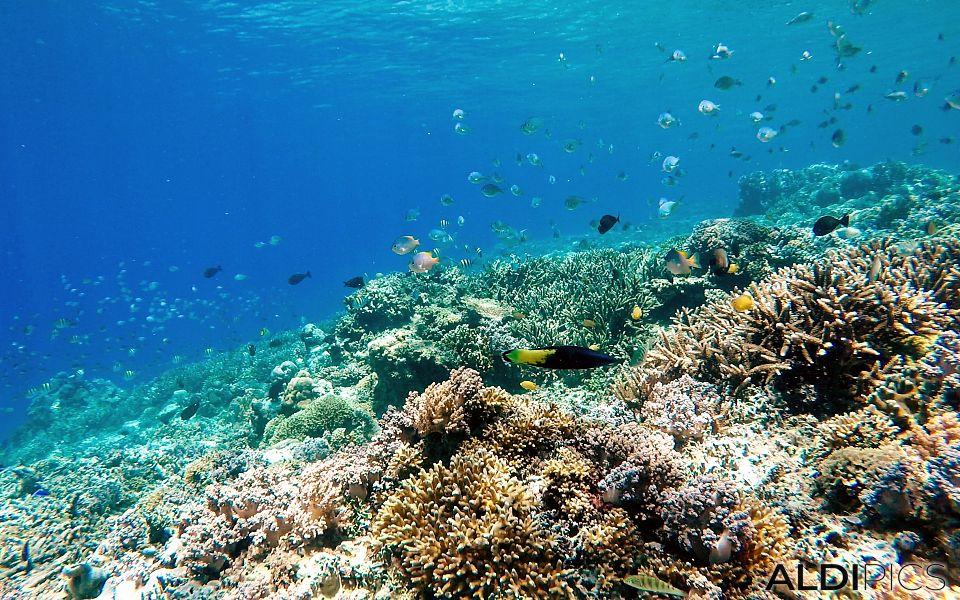Reefs of Gili Meno