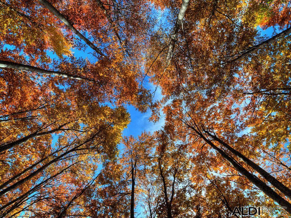 Autumn trees near Ravnogor village