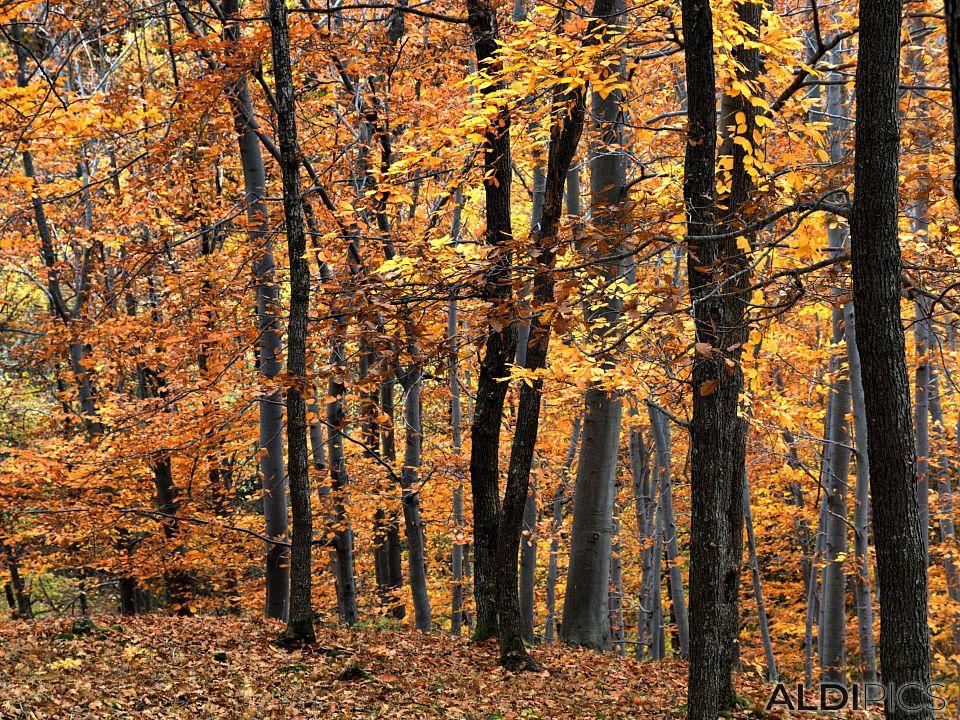 Forest near Ardino
