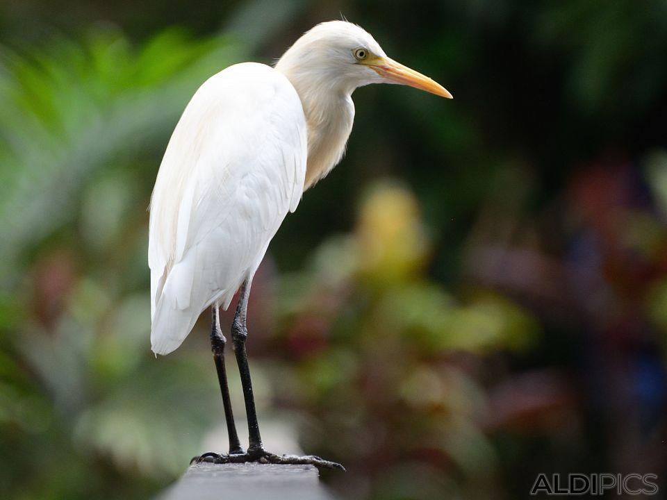 Birds in the park Kuala Lumpur