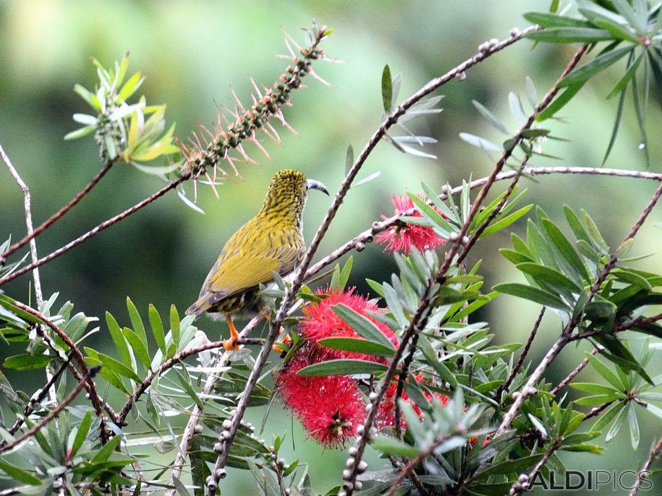 Birds in Fraser's Hill
