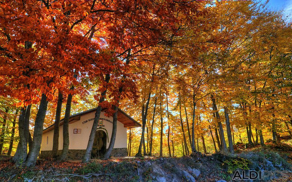 Есен в Родопите край село Розово