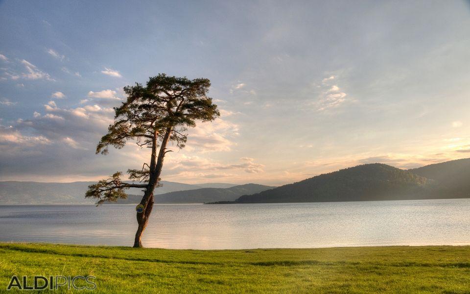 Самотно дърво пред залязващото слънце