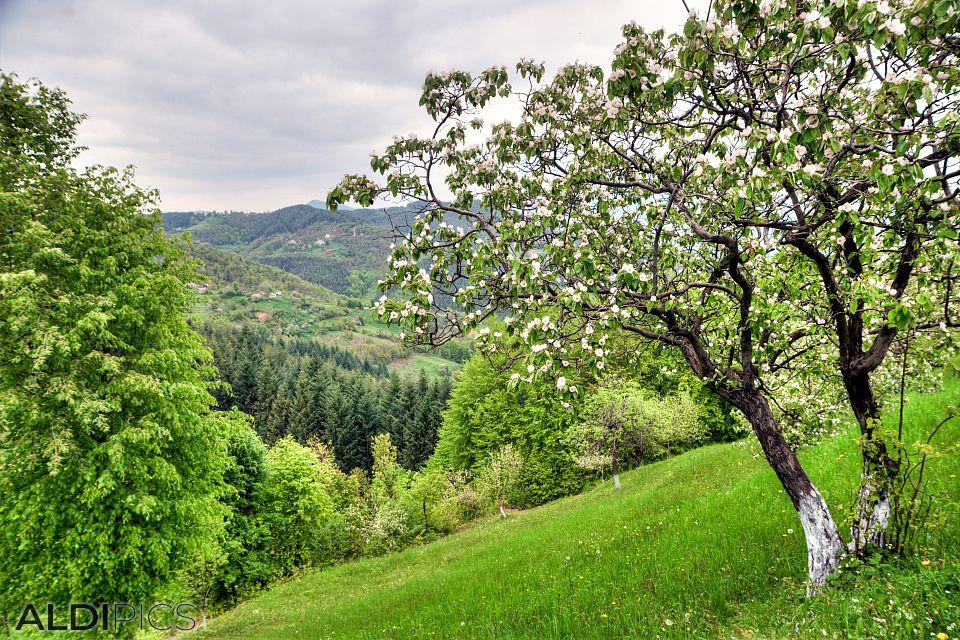 Селца в Родопите