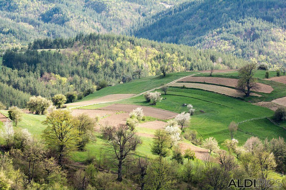 Родопски пейзажи