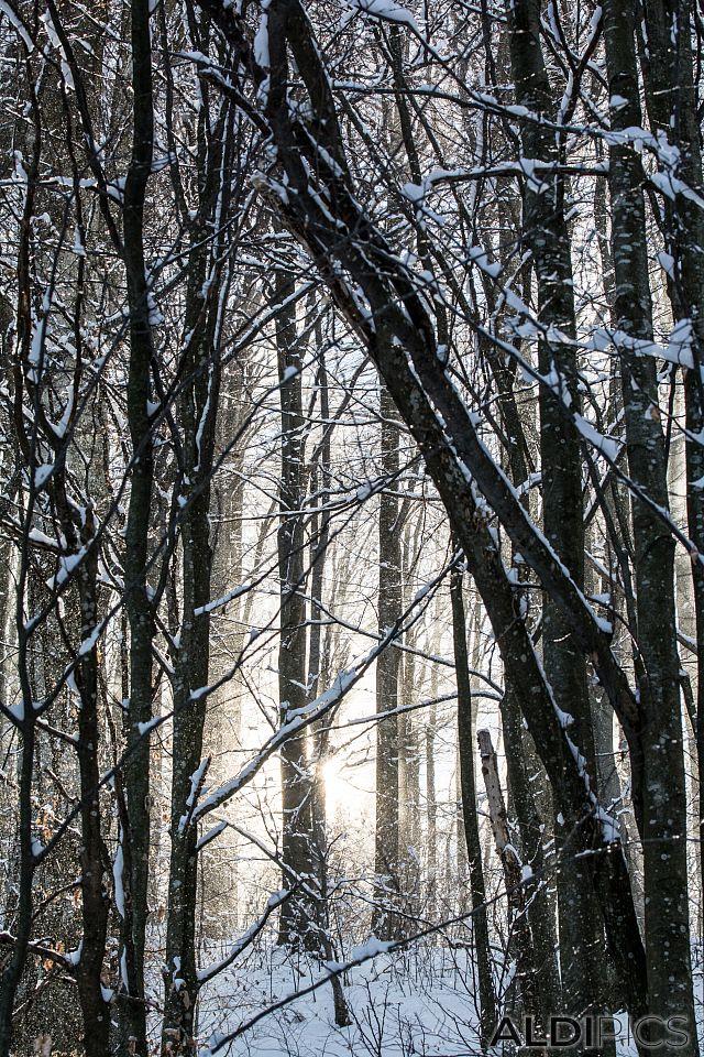 Снежна гора