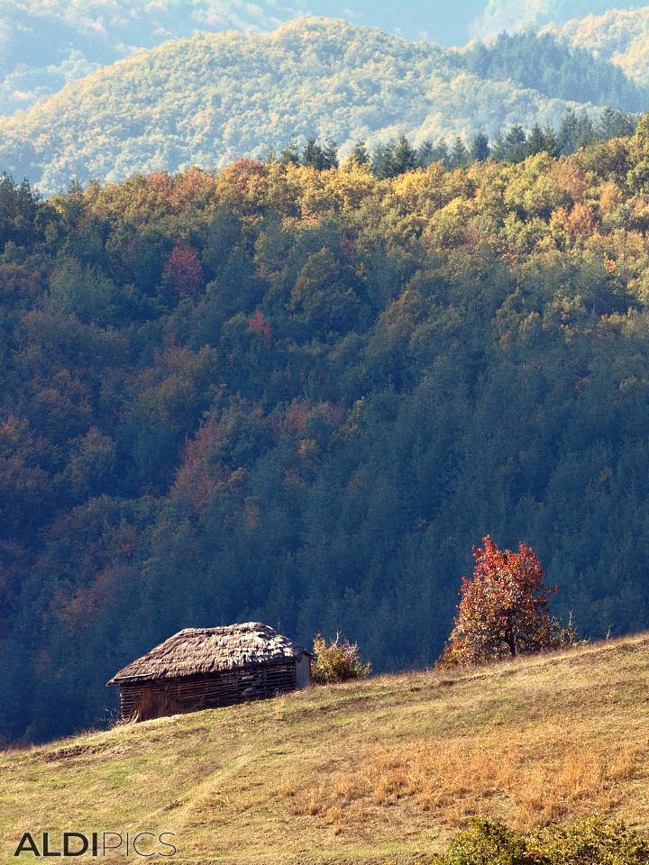 Landscapes near Zlatograd