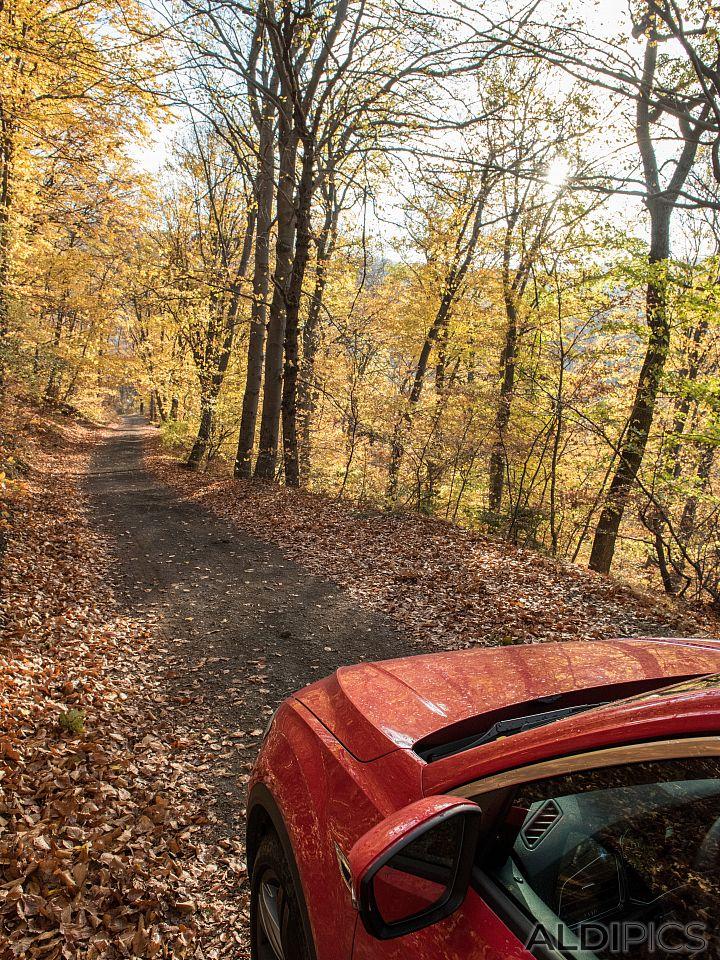 Есен във Витоша