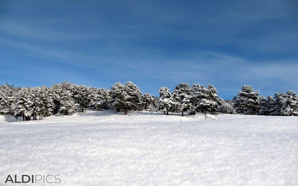 Пресен сняг