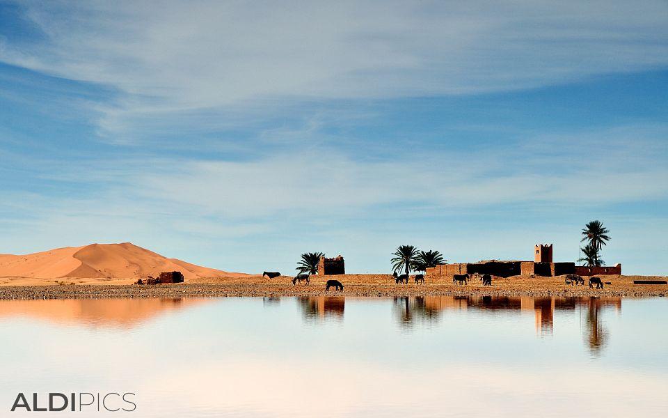 Оазис в Сахара