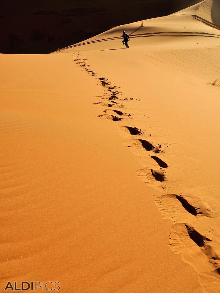 Следи в пустинята