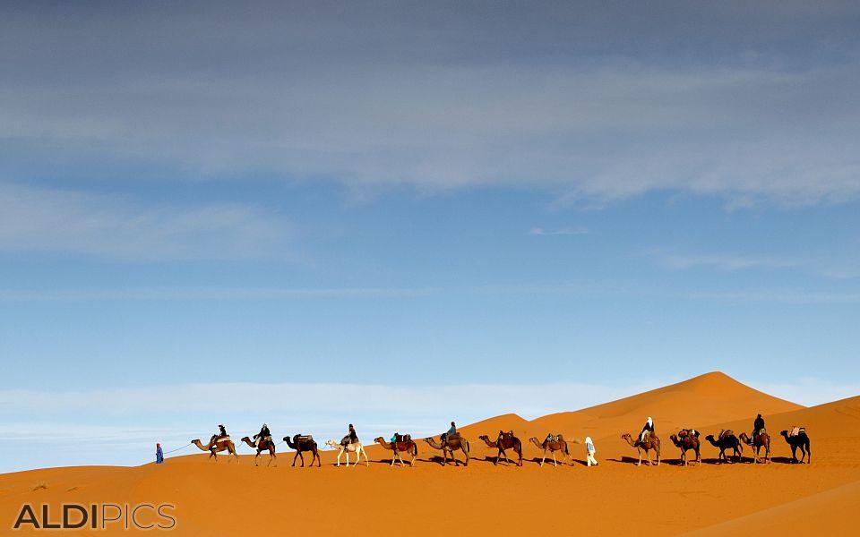 Керван камили в пустинята