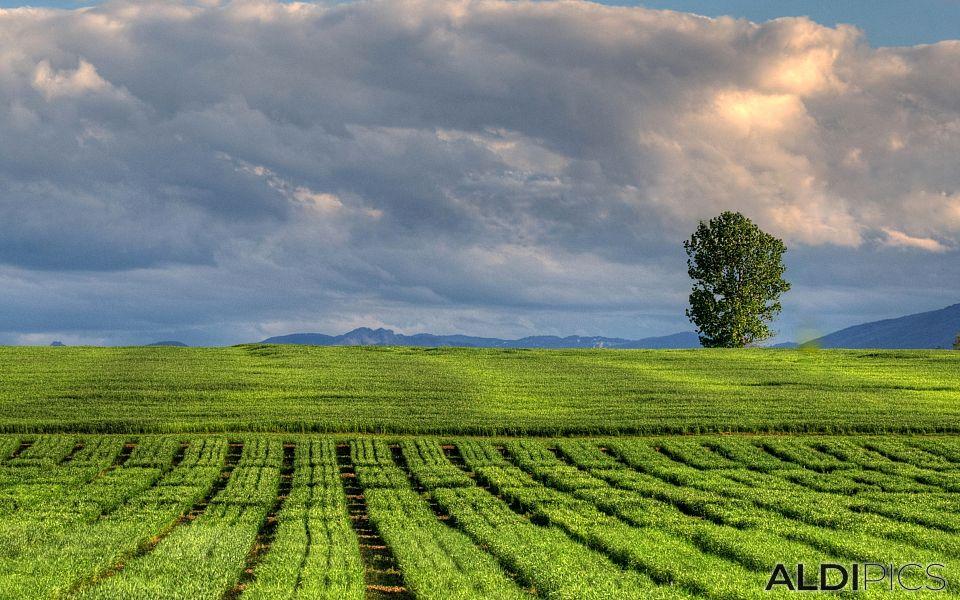 Fields near Plovdiv