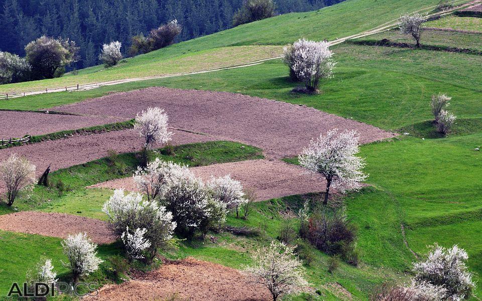 Spring fields near the Rhodope villages