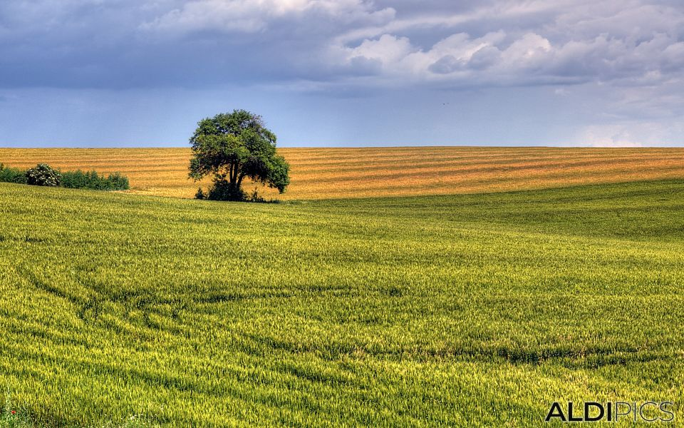 Fields near Stara Zagora