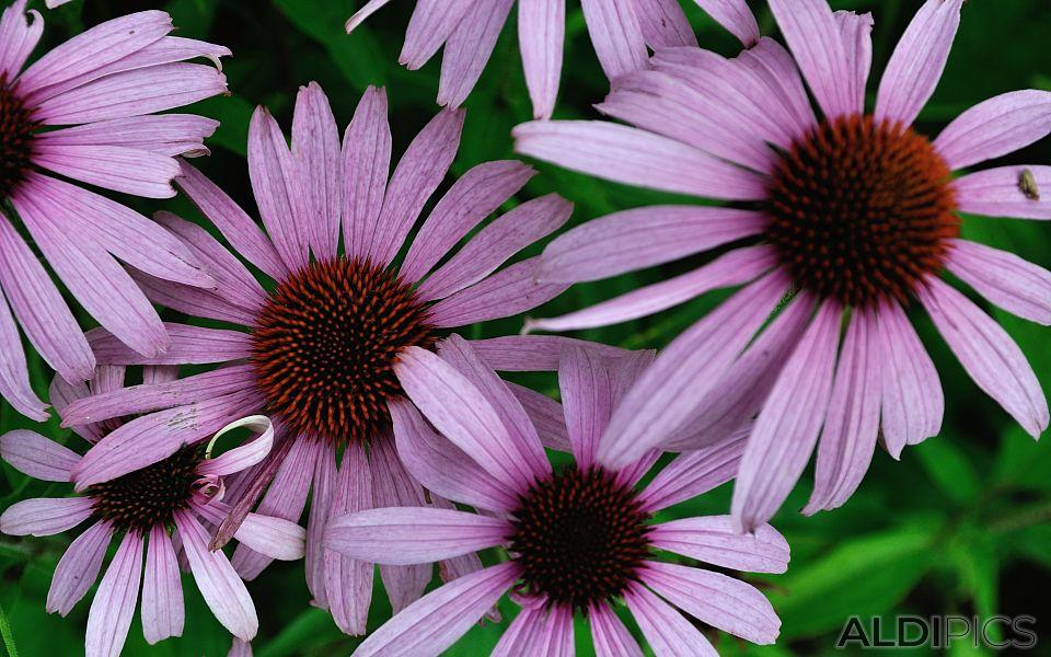 Beautiful flowers in Woburn