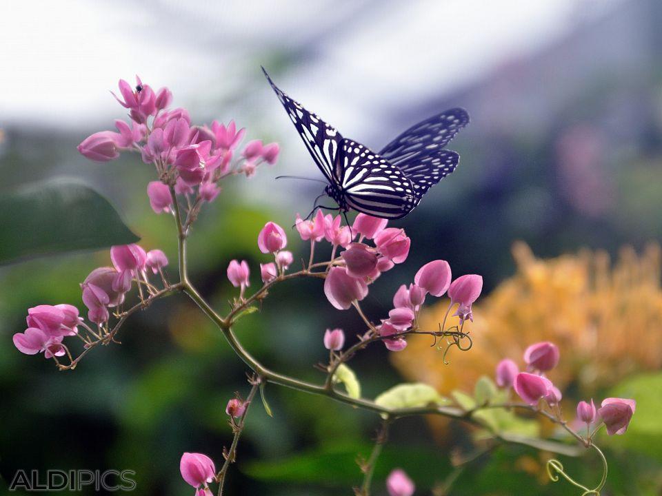 Пеперуди в парка на Куала Лумпур