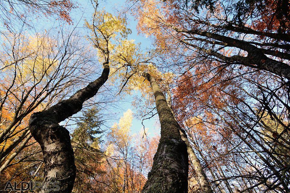 Autumn of Vitosha