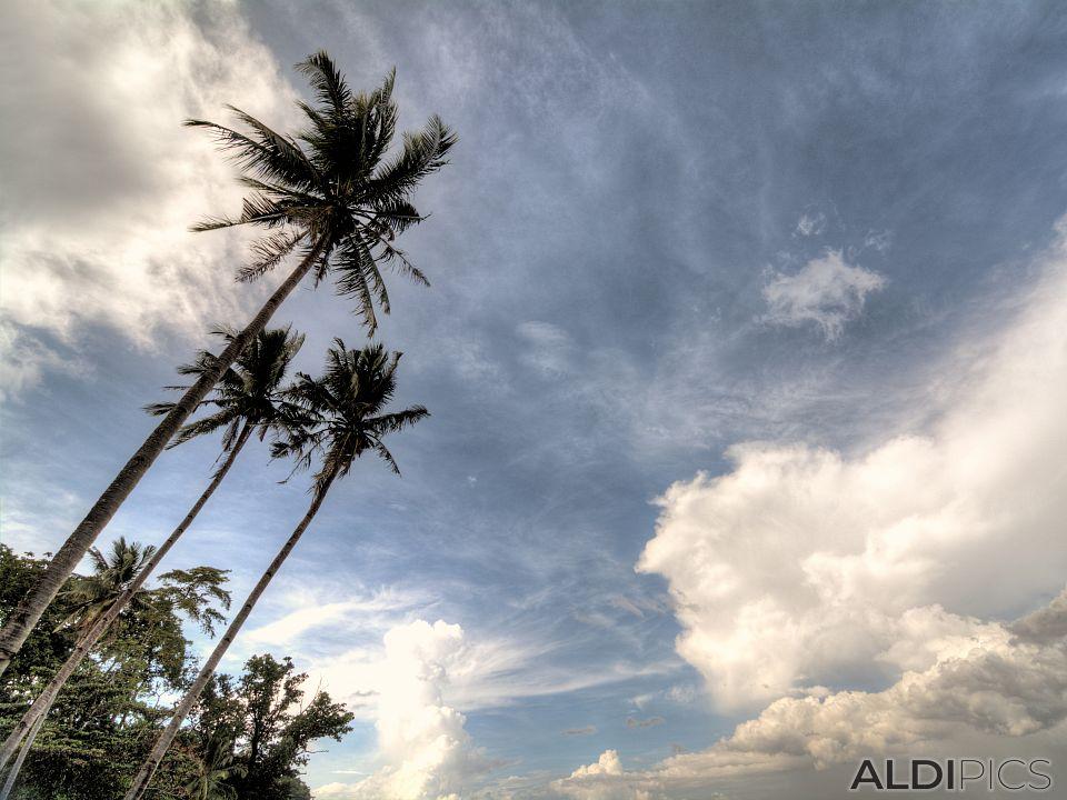 Някъде на остров Палаван