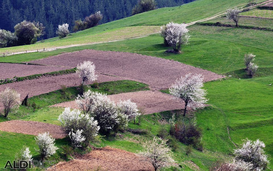 Spring fields near the Rhodope villages
