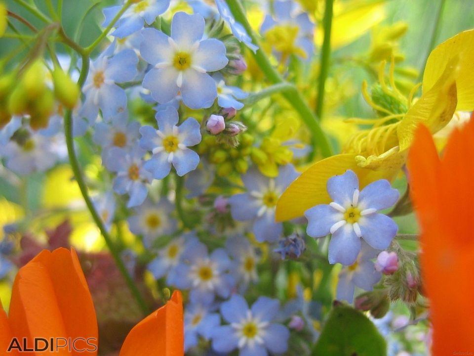 Букет нежни полски цветя