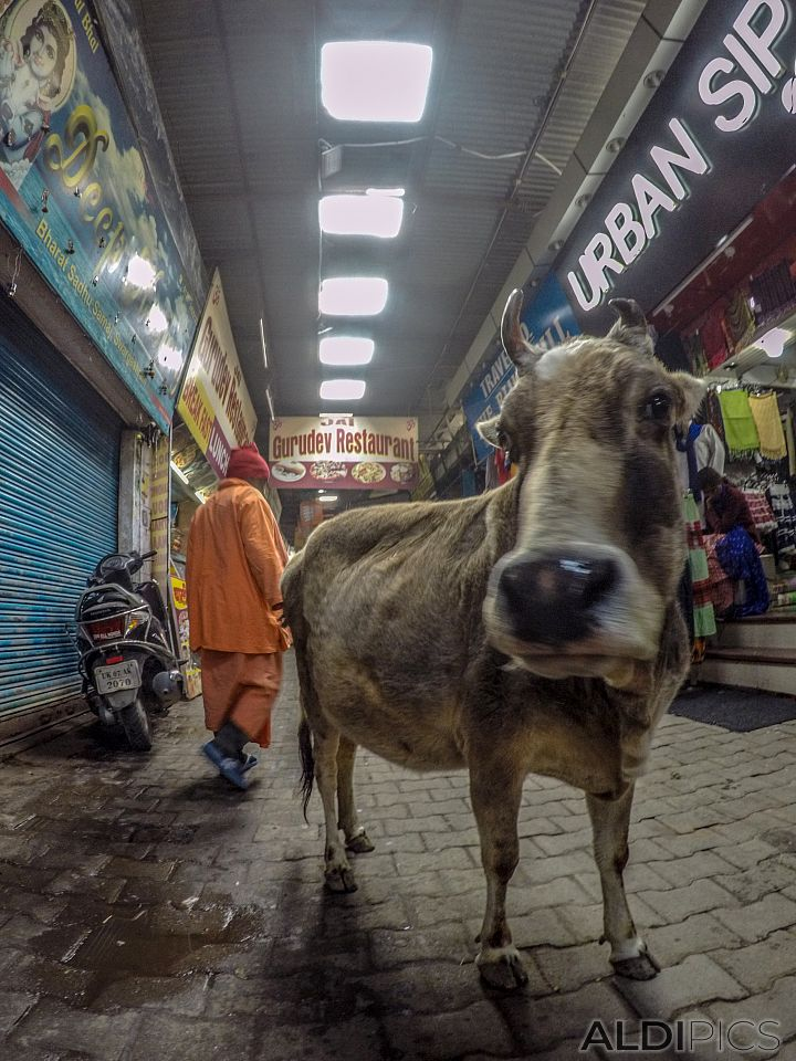 From the streets of Rishikesh