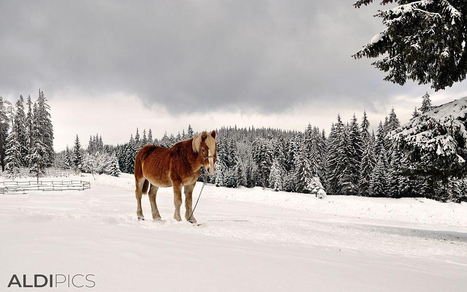 Horses in Starina near Yondola