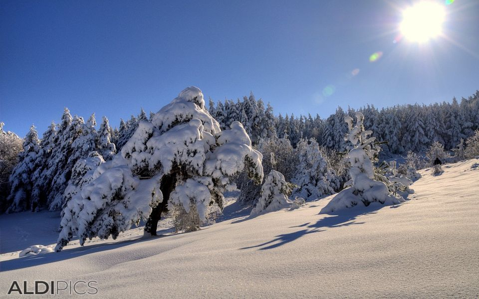 Winter landscapes from Rhodope