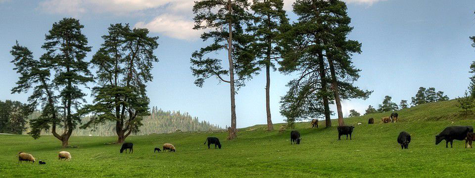 Meadow in the Rhodope
